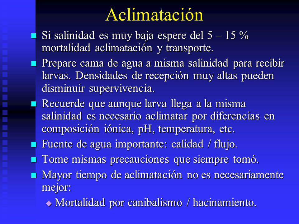 Aclimatación Si salinidad es muy baja espere del 5 – 15 % mortalidad aclimatación y transporte. Si salinidad es muy baja espere del 5 – 15 % mortalida
