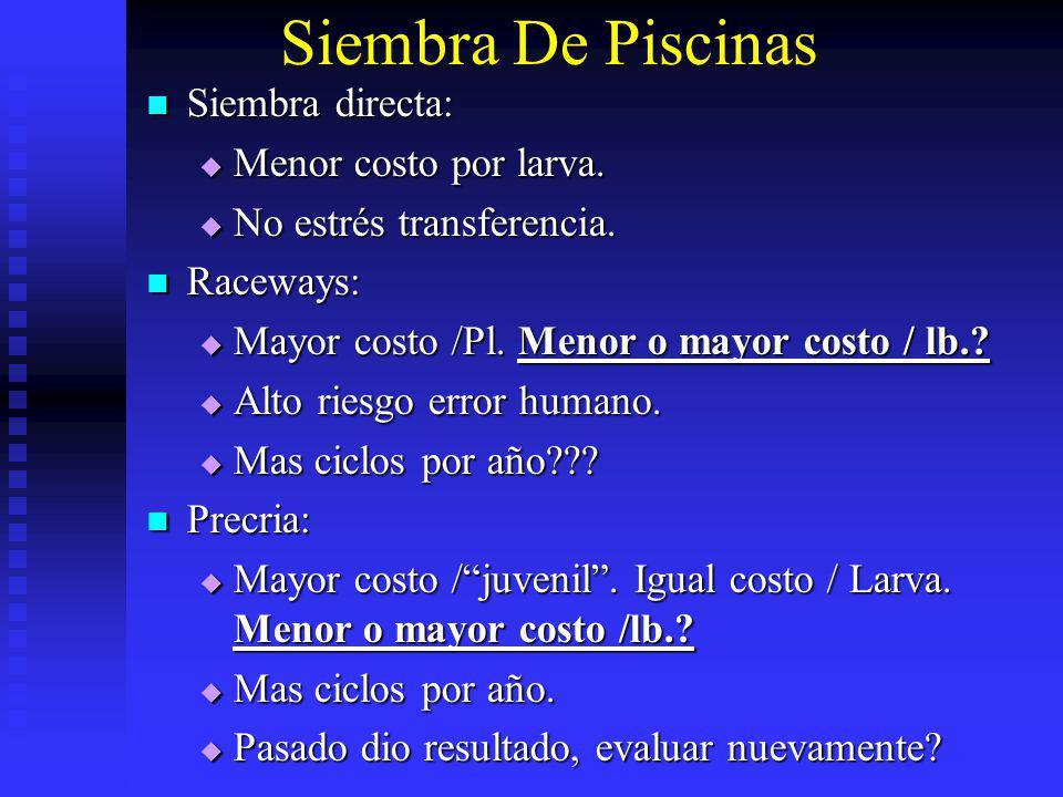 Siembra De Piscinas Siembra directa: Siembra directa: Menor costo por larva. Menor costo por larva. No estrés transferencia. No estrés transferencia.