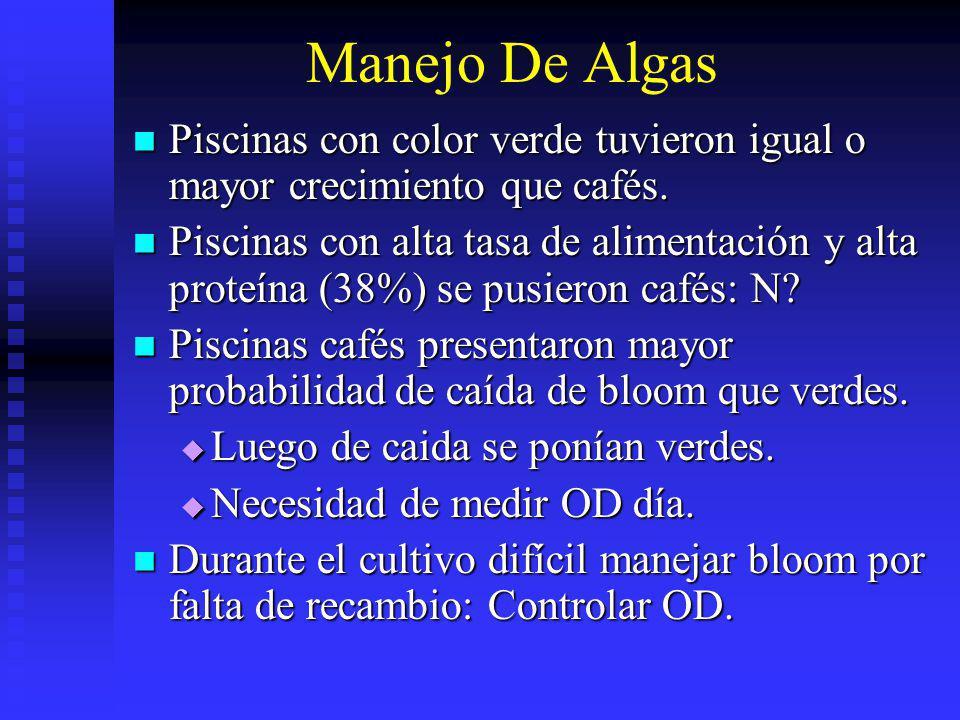 Manejo De Algas Piscinas con color verde tuvieron igual o mayor crecimiento que cafés. Piscinas con color verde tuvieron igual o mayor crecimiento que