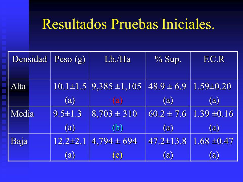 Resultados Pruebas Iniciales. Densidad Peso (g) Lb./Ha % Sup. F.C.R Alta 10.1±1.5 (a) 9,385 ±1,105 (a) 48.9 ± 6.9 (a) 1.59±0.20 (a) Media 9.5±1.3 (a)