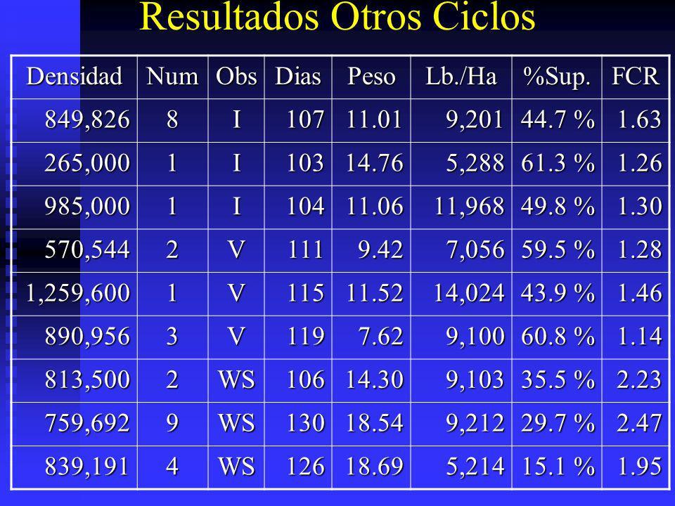Resultados Otros Ciclos DensidadNumObsDiasPesoLb./Ha%Sup.FCR 849,8268I10711.019,201 44.7 % 1.63 265,0001I10314.765,288 61.3 % 1.26 985,0001I10411.0611
