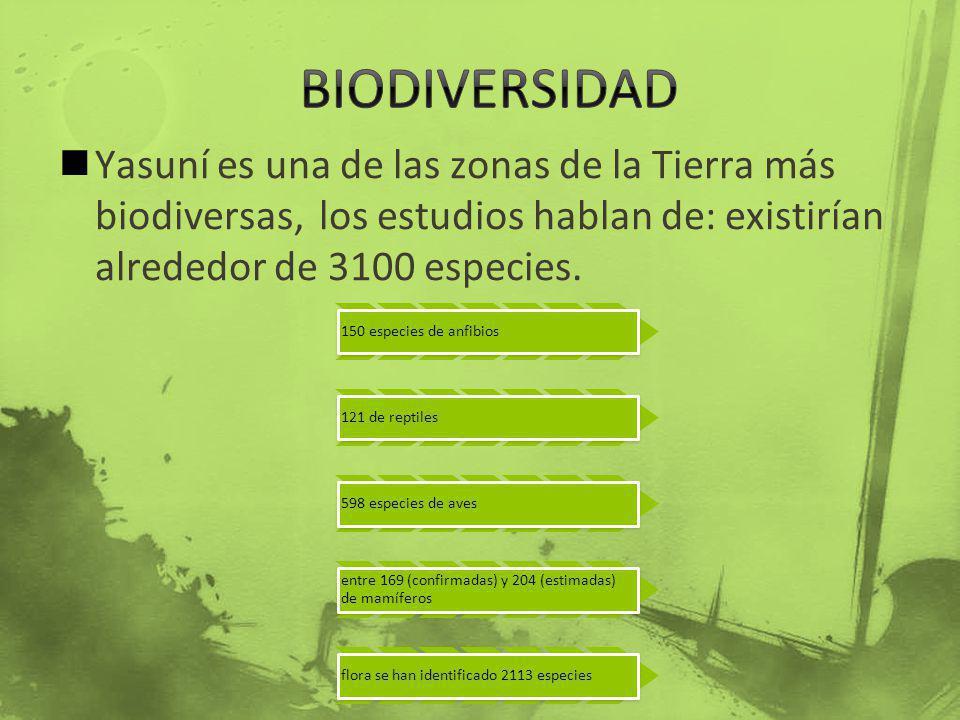 Yasuní es una de las zonas de la Tierra más biodiversas, los estudios hablan de: existirían alrededor de 3100 especies. 150 especies de anfibios 121 d