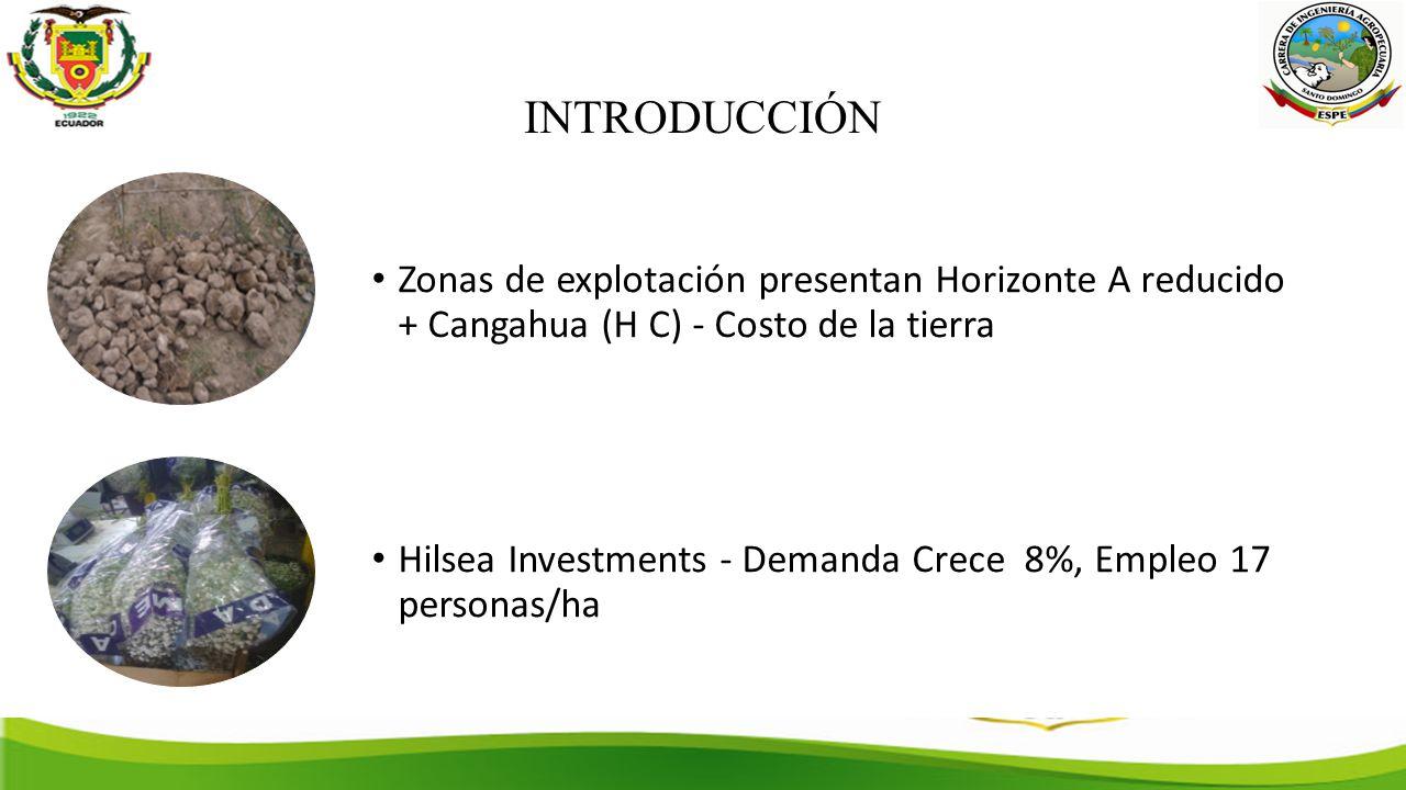 INTRODUCCIÓN Zonas de explotación presentan Horizonte A reducido + Cangahua (H C) - Costo de la tierra Hilsea Investments - Demanda Crece 8%, Empleo 17 personas/ha