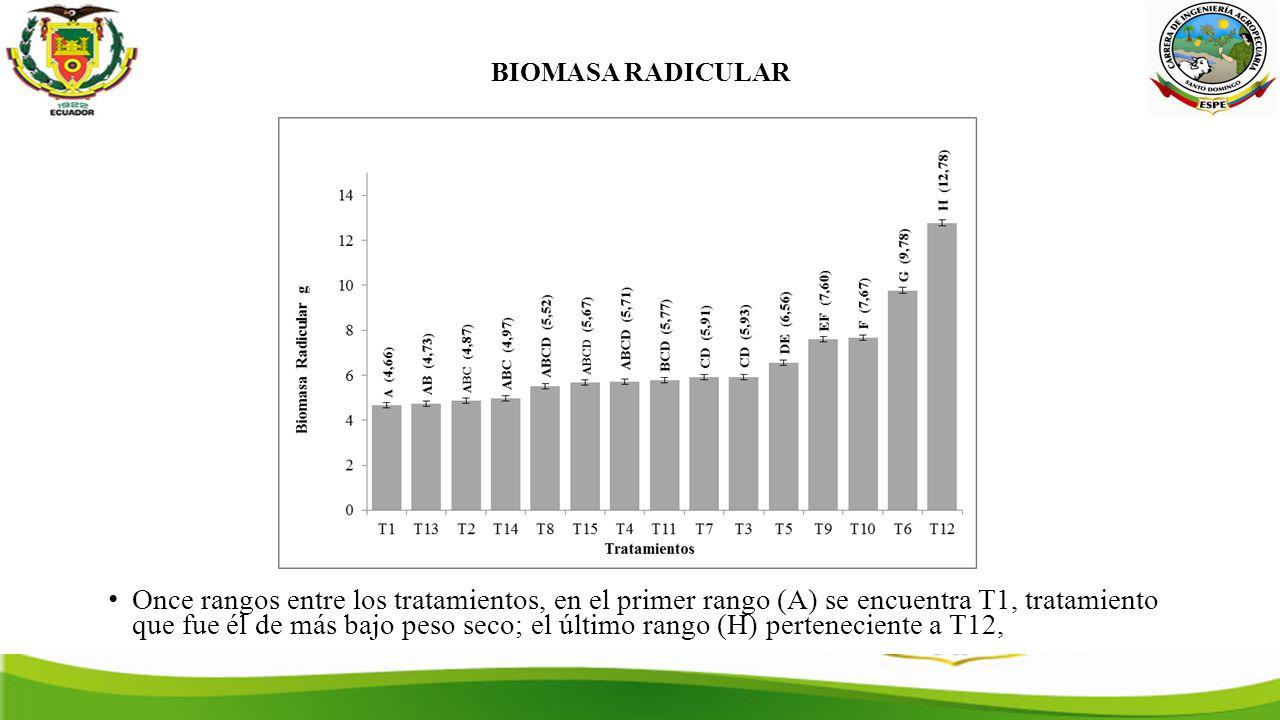 BIOMASA RADICULAR Once rangos entre los tratamientos, en el primer rango (A) se encuentra T1, tratamiento que fue él de más bajo peso seco; el último rango (H) perteneciente a T12,