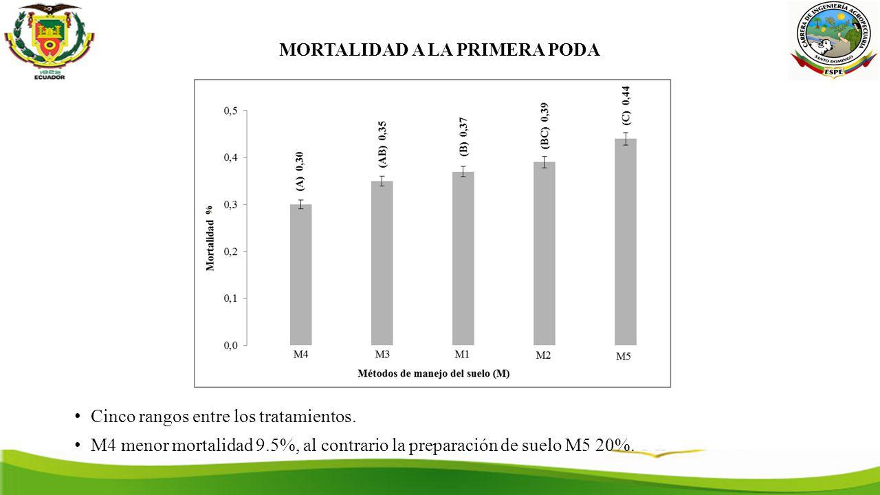 MORTALIDAD A LA PRIMERA PODA Cinco rangos entre los tratamientos.