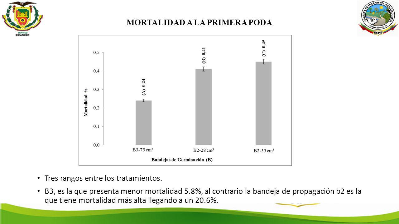 MORTALIDAD A LA PRIMERA PODA Tres rangos entre los tratamientos.