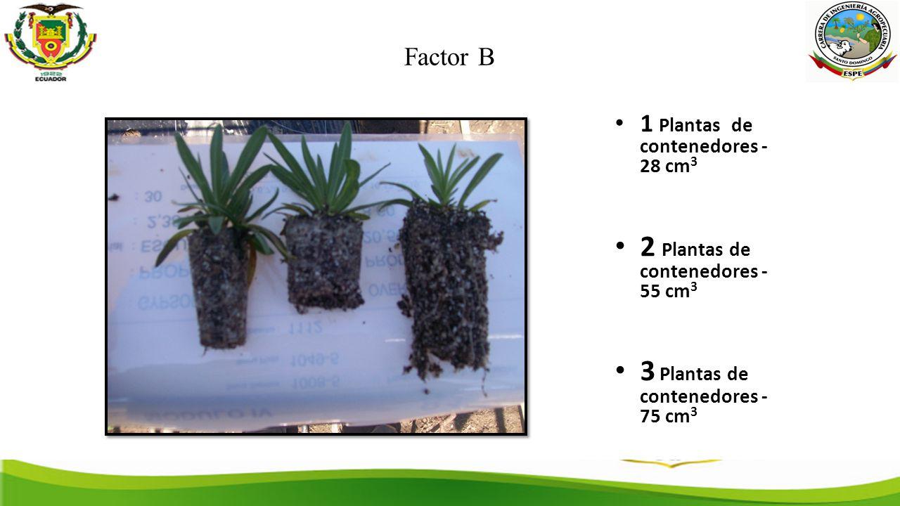 Factor B 1 Plantas de contenedores - 28 cm 3 2 Plantas de contenedores - 55 cm 3 3 Plantas de contenedores - 75 cm 3