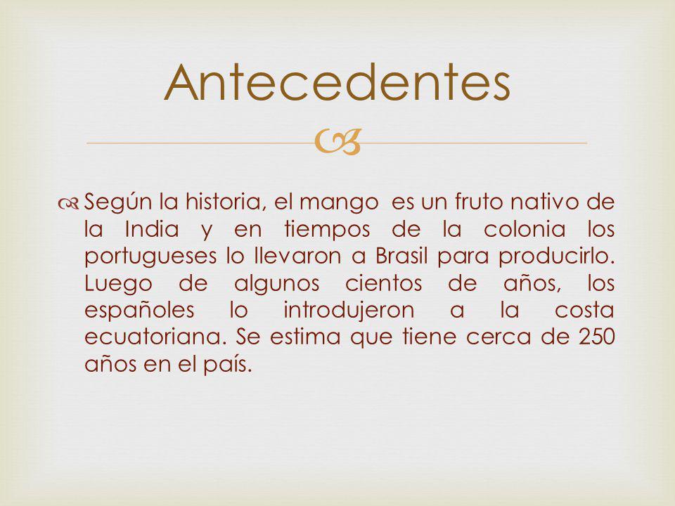 Según la historia, el mango es un fruto nativo de la India y en tiempos de la colonia los portugueses lo llevaron a Brasil para producirlo. Luego de a