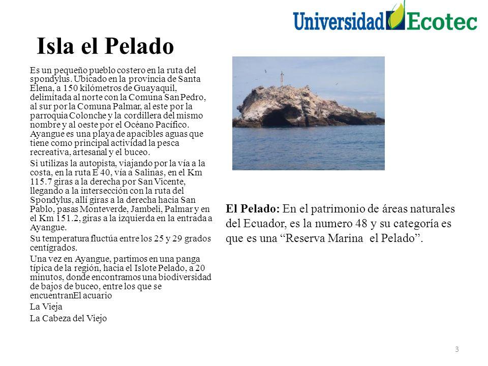 Isla el Pelado Es un pequeño pueblo costero en la ruta del spondylus.