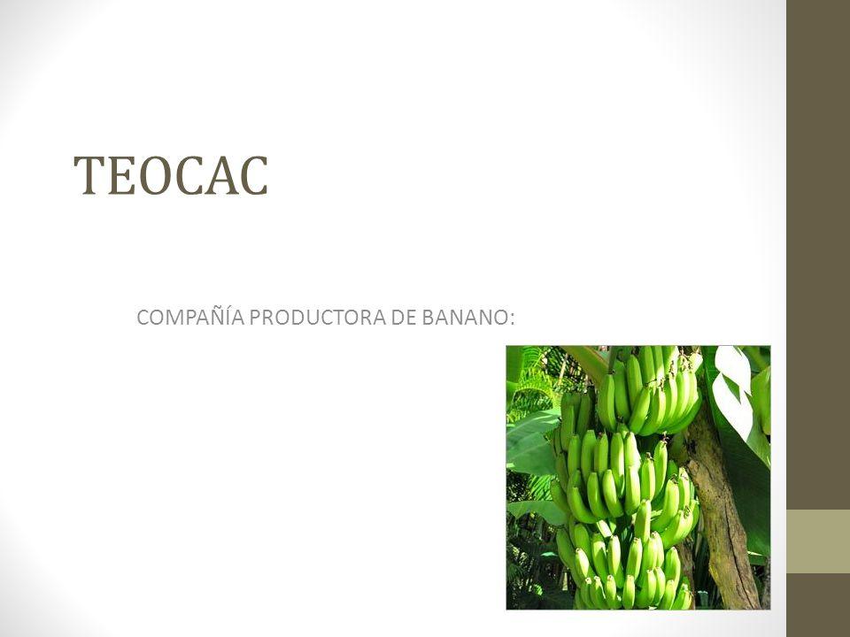 TEOCAC COMPAÑÍA PRODUCTORA DE BANANO: