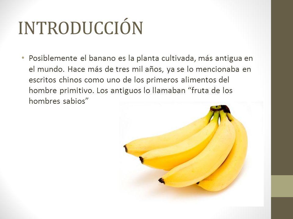 INTRODUCCIÓN Posiblemente el banano es la planta cultivada, más antigua en el mundo. Hace más de tres mil años, ya se lo mencionaba en escritos chinos