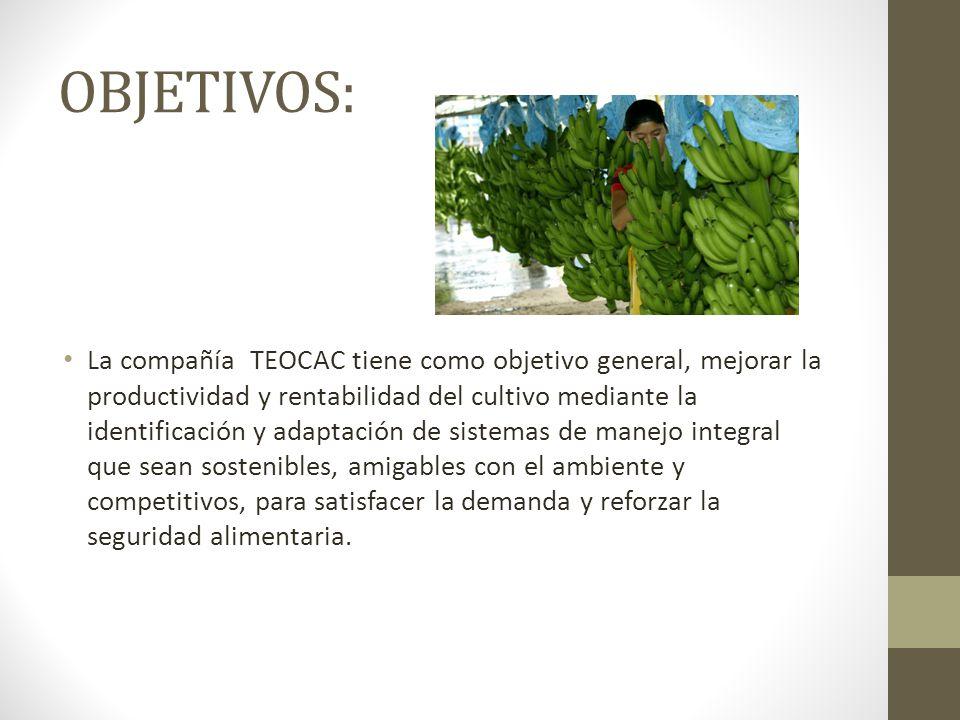 OBJETIVOS: La compañía TEOCAC tiene como objetivo general, mejorar la productividad y rentabilidad del cultivo mediante la identificación y adaptación de sistemas de manejo integral que sean sostenibles, amigables con el ambiente y competitivos, para satisfacer la demanda y reforzar la seguridad alimentaria.