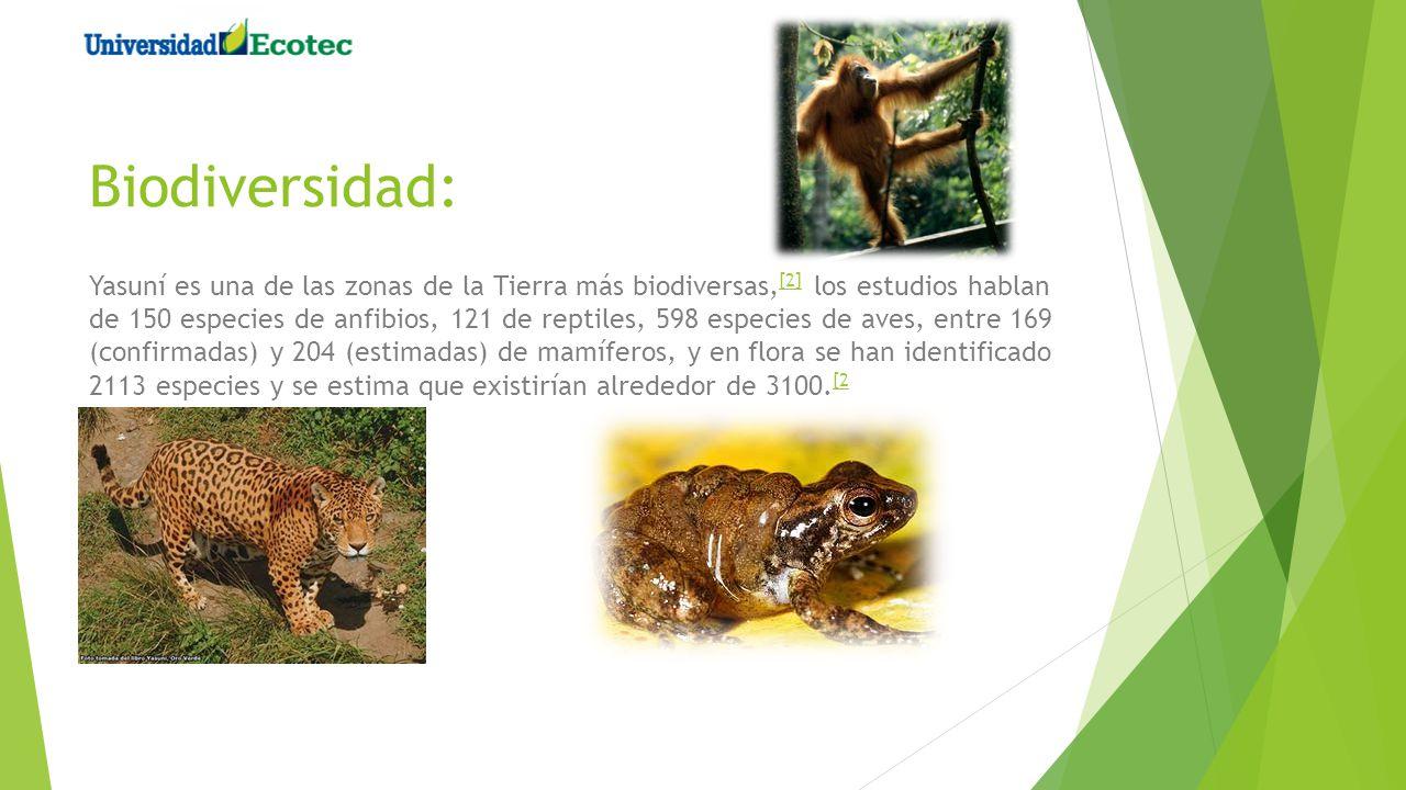 Biodiversidad: Yasuní es una de las zonas de la Tierra más biodiversas, [2] los estudios hablan de 150 especies de anfibios, 121 de reptiles, 598 espe