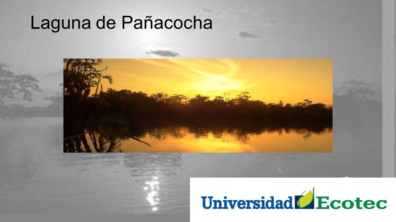 Laguna de Pañacocha