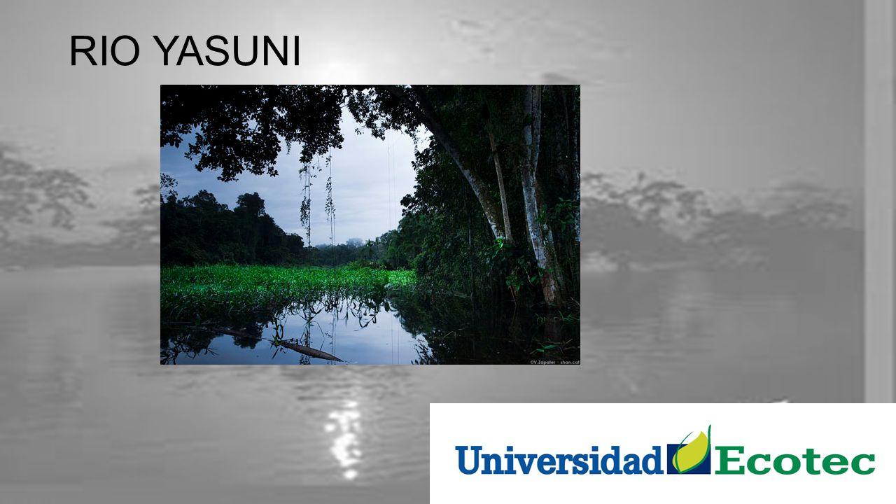 Iniciativa Yasuní-ITT La Iniciativa Yasuní-ITT fue un proyecto oficial del gobierno de Ecuador, desde 2007 hasta 2013, durante el mandato de Rafael Correa, que condiciona el mantenimiento de la Zona Intangible decretada en 1998 por el gobierno de Jamil Mahuad en un sector del Parque Nacional Yasuní ubicado entre los cuadrantes de exploración petrolera Ishpingo, Tiputini y Tambococha.