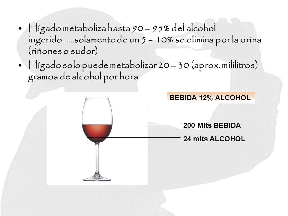 Hígado metaboliza hasta 90 – 95% del alcohol ingerido……solamente de un 5 – 10% se elimina por la orina (riñones o sudor) Hígado solo puede metabolizar