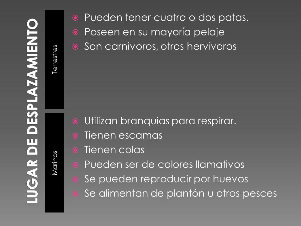 Terrestres Marinos Pueden tener cuatro o dos patas. Poseen en su mayoría pelaje Son carnivoros, otros hervivoros Utilizan branquias para respirar. Tie