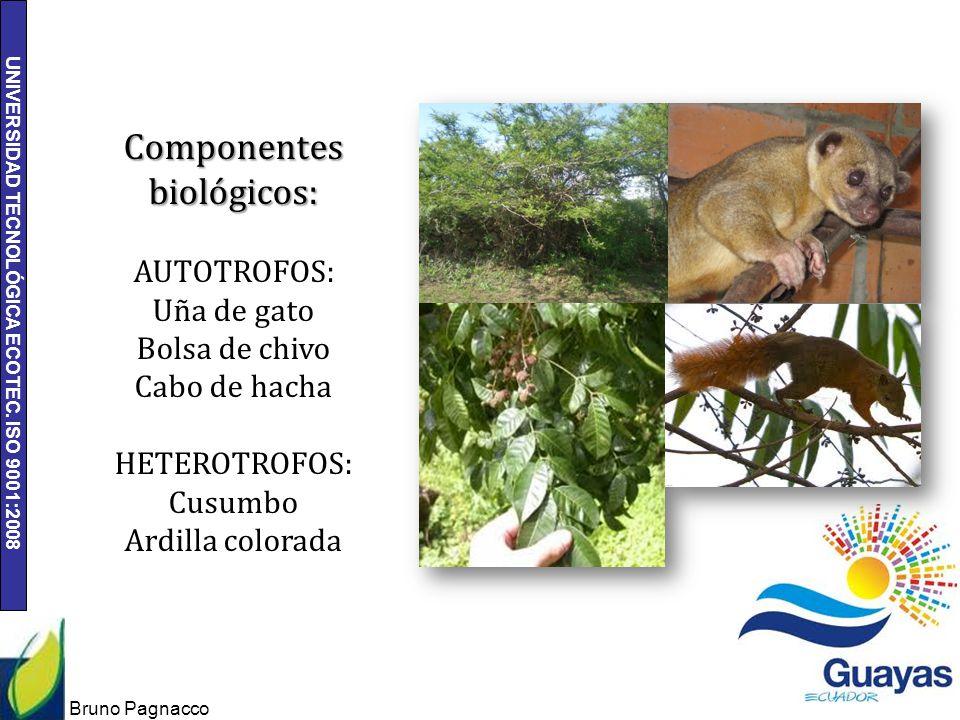 UNIVERSIDAD TECNOLÓGICA ECOTEC. ISO 9001:2008 Bruno Pagnacco 10 Componentes biológicos: AUTOTROFOS: Uña de gato Bolsa de chivo Cabo de hacha HETEROTRO