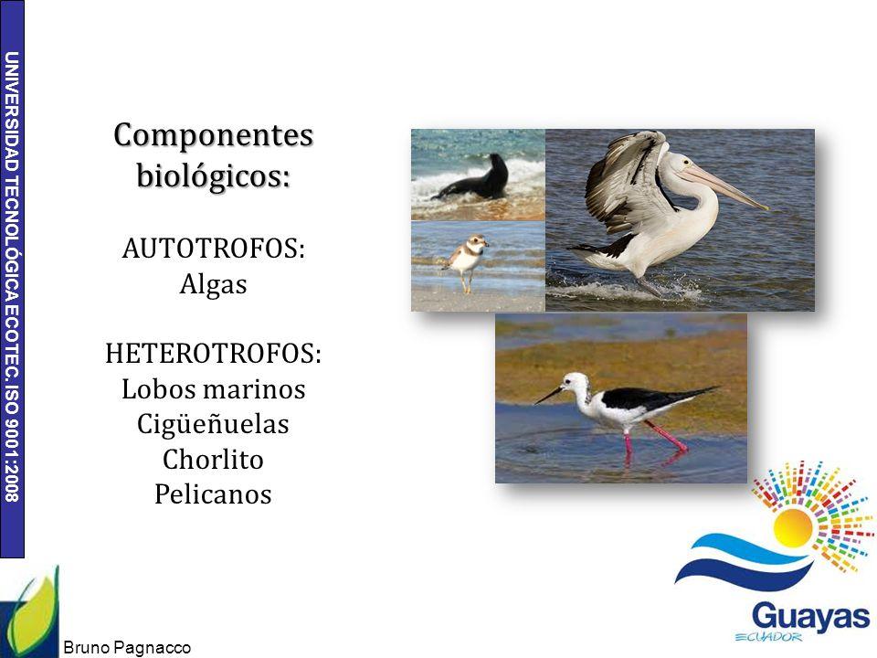 UNIVERSIDAD TECNOLÓGICA ECOTEC. ISO 9001:2008 Bruno Pagnacco 12 Componentes biológicos: AUTOTROFOS: Algas HETEROTROFOS: Lobos marinos Cigüeñuelas Chor