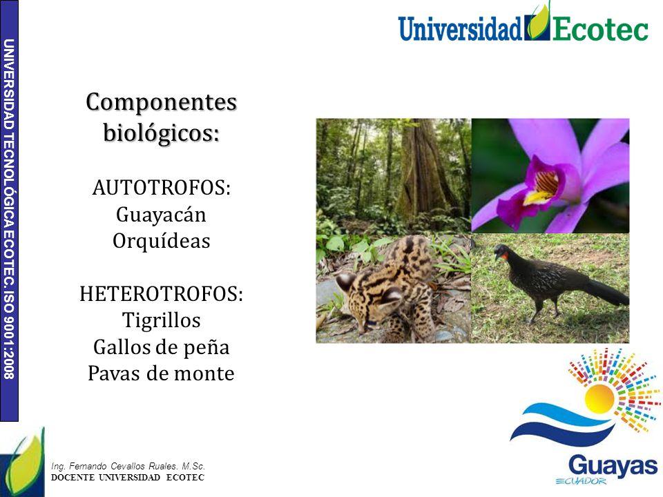 UNIVERSIDAD TECNOLÓGICA ECOTEC. ISO 9001:2008 4 Ing. Fernando Cevallos Ruales. M.Sc. DOCENTE UNIVERSIDAD ECOTEC Componentes biológicos: AUTOTROFOS: Gu