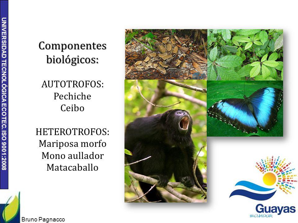 UNIVERSIDAD TECNOLÓGICA ECOTEC. ISO 9001:2008 Bruno Pagnacco 8 Componentes biológicos: AUTOTROFOS: Pechiche Ceibo HETEROTROFOS: Mariposa morfo Mono au
