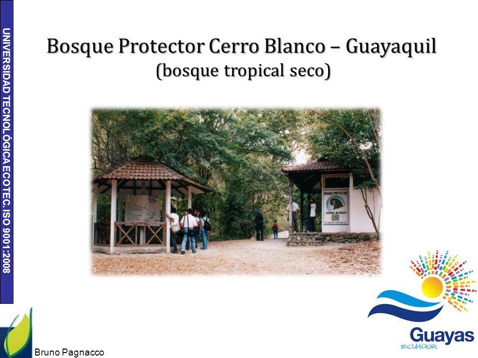 UNIVERSIDAD TECNOLÓGICA ECOTEC. ISO 9001:2008 Bruno Pagnacco 9 Bosque Protector Cerro Blanco – Guayaquil (bosque tropical seco)