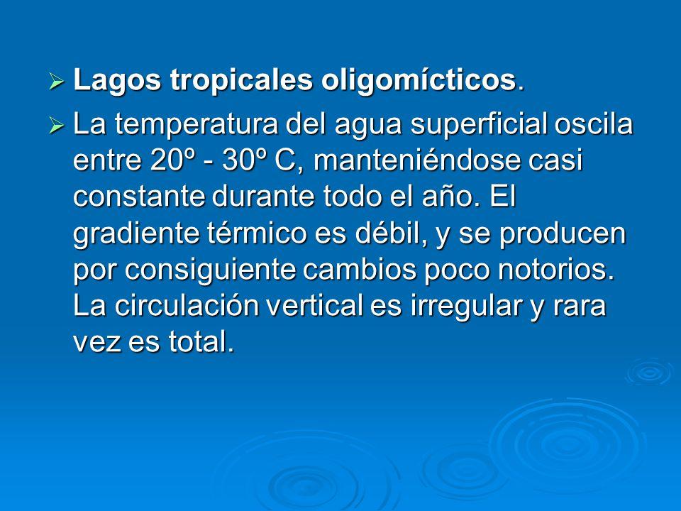 Lagos tropicales oligomícticos. Lagos tropicales oligomícticos. La temperatura del agua superficial oscila entre 20º - 30º C, manteniéndose casi const