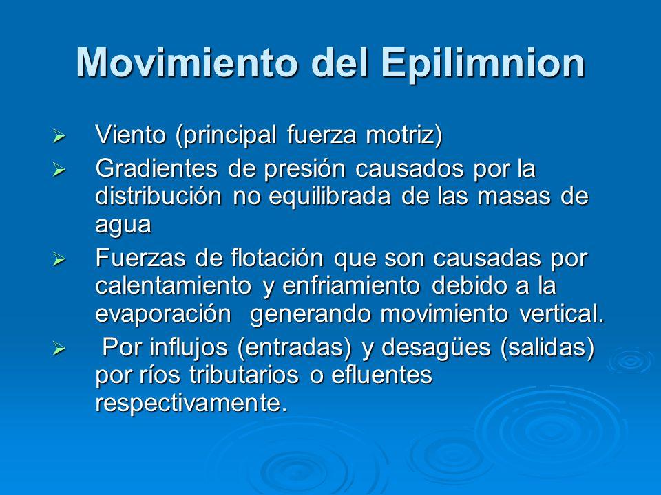Movimiento del Epilimnion Viento (principal fuerza motriz) Viento (principal fuerza motriz) Gradientes de presión causados por la distribución no equi