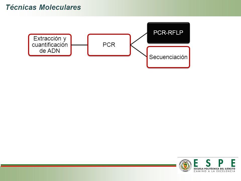 Técnicas Moleculares Extracción y cuantificación de ADN PCRPCR-RFLPSecuenciación