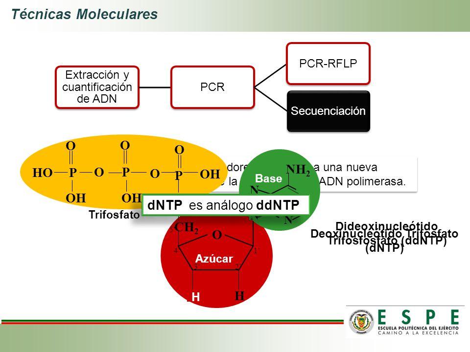 Técnicas Moleculares Extracción y cuantificación de ADN PCRPCR-RFLPSecuenciación Incorporación de terminadores (ddNTPs) a una nueva cadena de ADN medi