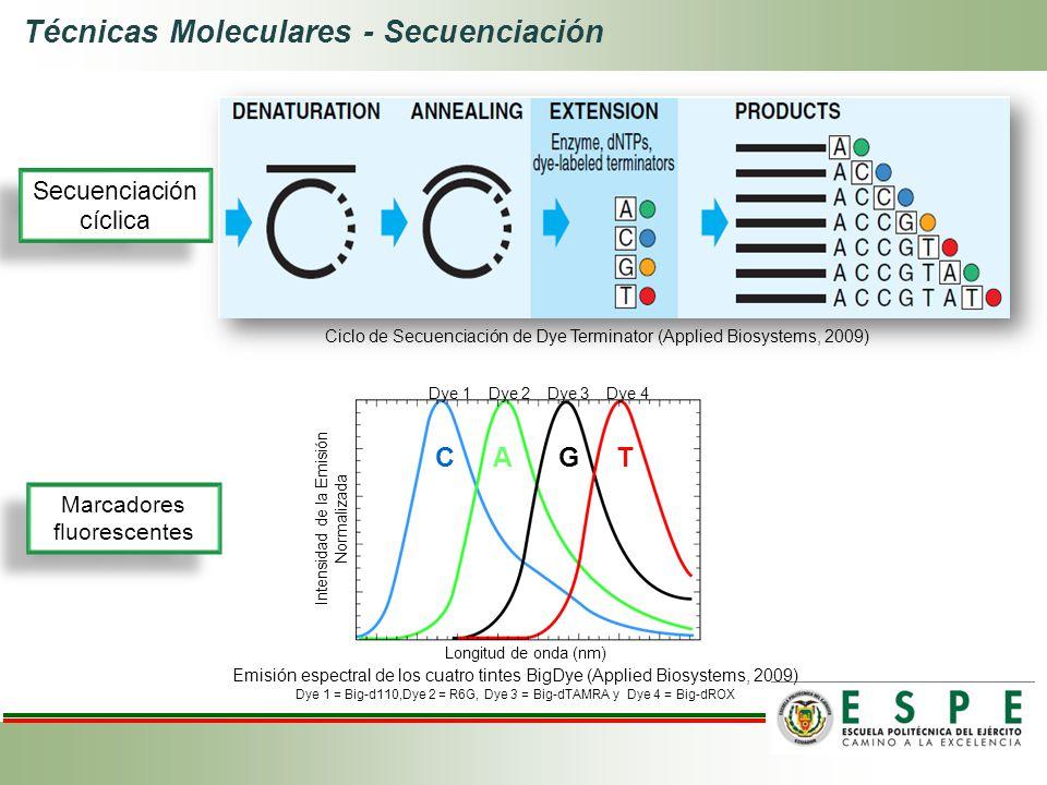 Longitud de onda (nm) Intensidad de la Emisión Normalizada Dye 1 Dye 2 Dye 3 Dye 4 Ciclo de Secuenciación de Dye Terminator (Applied Biosystems, 2009)
