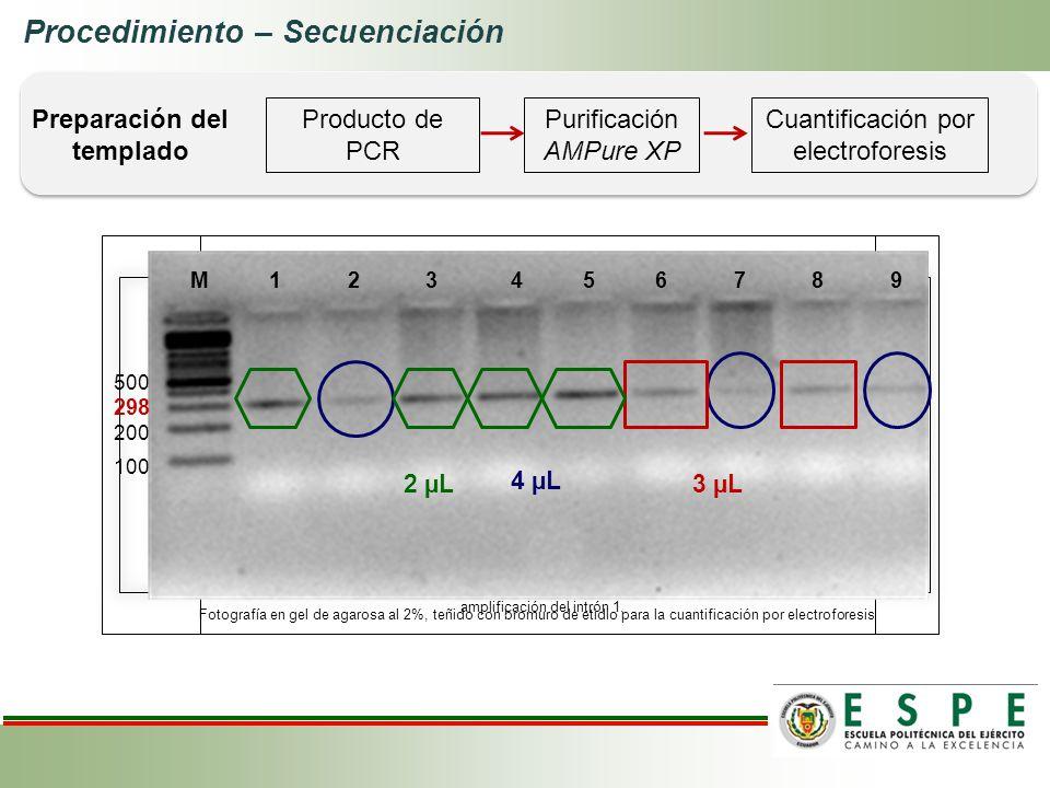 Procedimiento – Secuenciación Producto de PCR Cuantificación por electroforesis Purificación AMPure XP Preparación del templado M 1 2 3 4 5 6 7 8 9 10