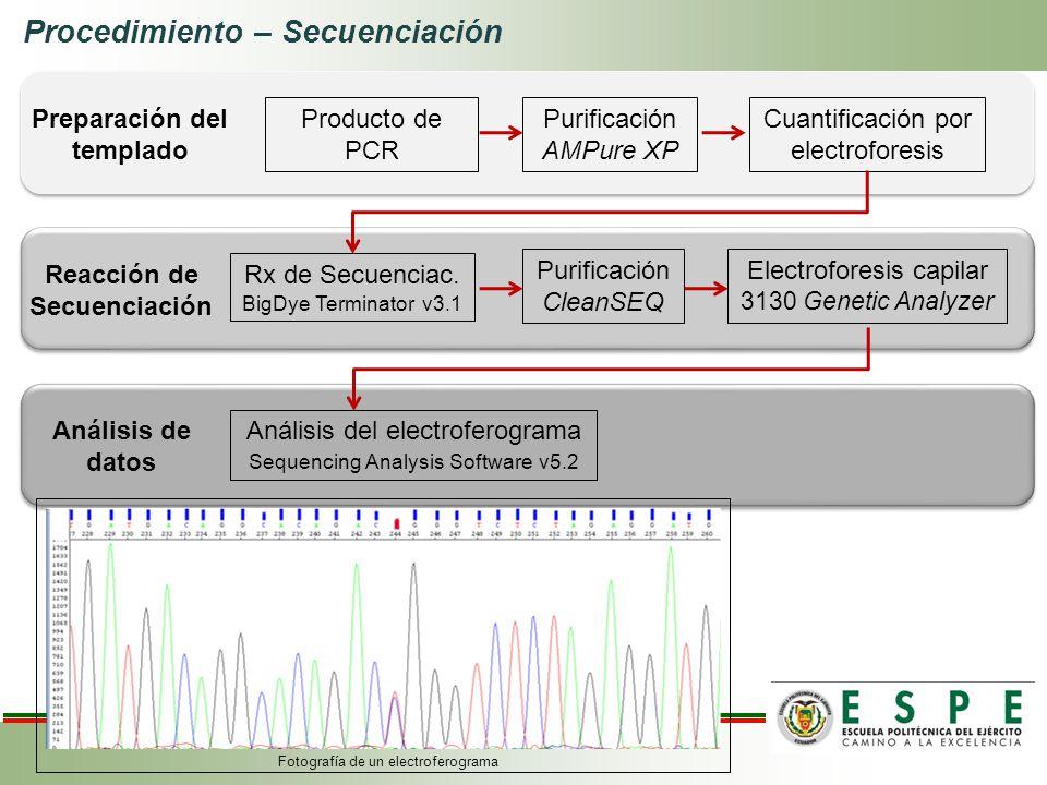Análisis del electroferograma Sequencing Analysis Software v5.2 Análisis de datos Producto de PCR Cuantificación por electroforesis Purificación AMPur