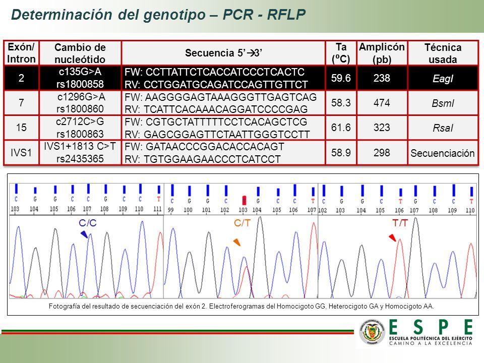 Determinación del genotipo – PCR - RFLP Fotografía del resultado de secuenciación del exón 2. Electroferogramas del Homocigoto GG, Heterocigoto GA y H