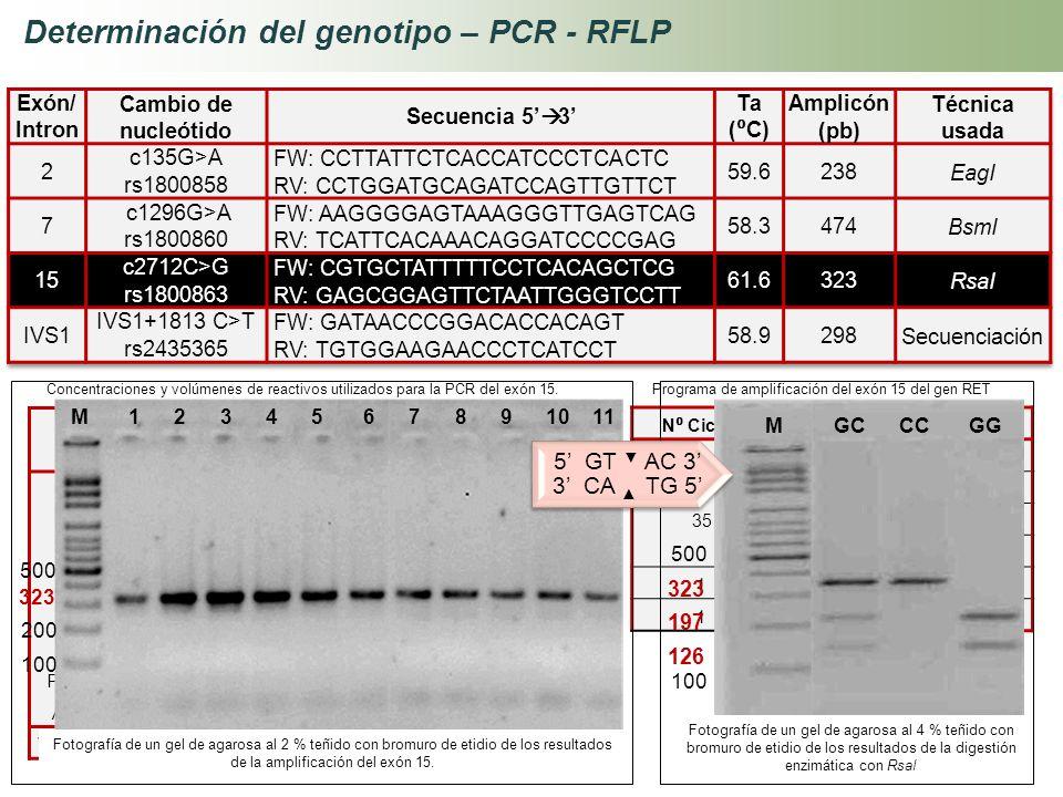 Determinación del genotipo – PCR - RFLP Reactivos Concentración inicial Concentración Final Volumen 1x (µL) ADN10 ng3 Buffer10 X1 X5 MgCl 2 50 mM2 mM2