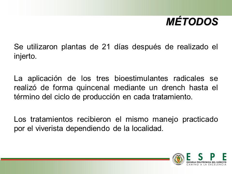 MÉTODOS Se utilizaron plantas de 21 días después de realizado el injerto. La aplicación de los tres bioestimulantes radicales se realizó de forma quin