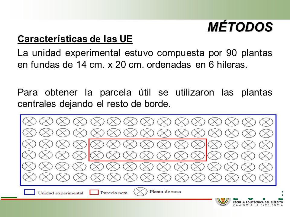 MÉTODOS Características de las UE La unidad experimental estuvo compuesta por 90 plantas en fundas de 14 cm. x 20 cm. ordenadas en 6 hileras. Para obt
