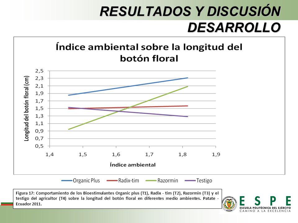 RESULTADOS Y DISCUSIÓN DESARROLLO Figura 17: Comportamiento de los Bioestimulantes Organic plus (T1), Radix - tim (T2), Razormin (T3) y el testigo del