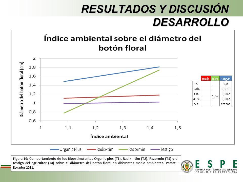 RESULTADOS Y DISCUSIÓN DESARROLLO Figura 19: Comportamiento de los Bioestimulantes Organic plus (T1), Radix - tim (T2), Razormin (T3) y el testigo del