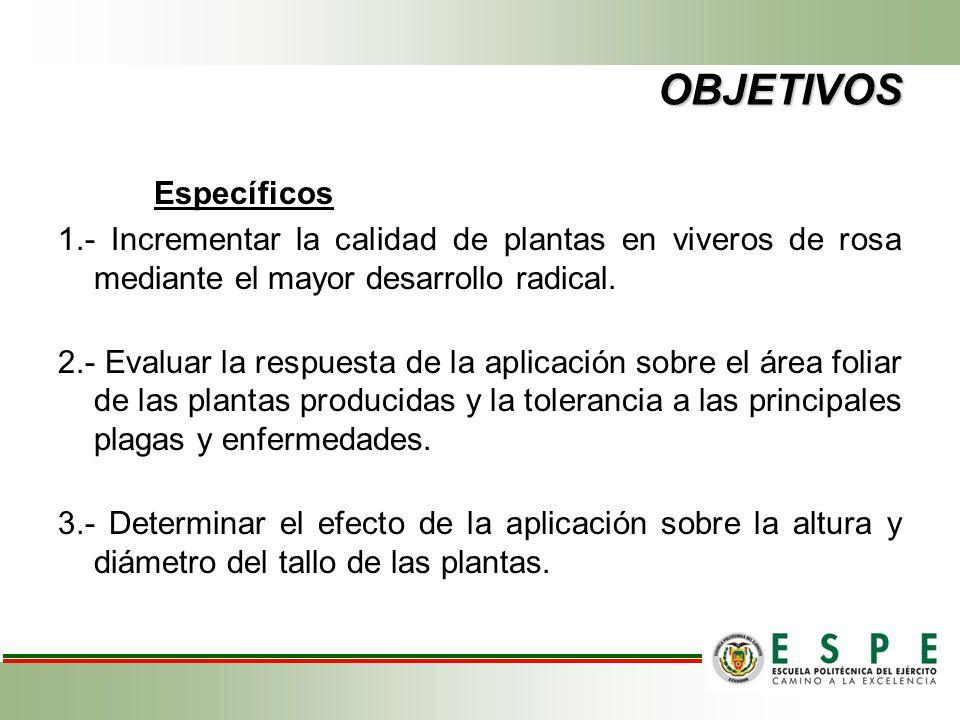 OBJETIVOS Específicos 1.- Incrementar la calidad de plantas en viveros de rosa mediante el mayor desarrollo radical. 2.- Evaluar la respuesta de la ap