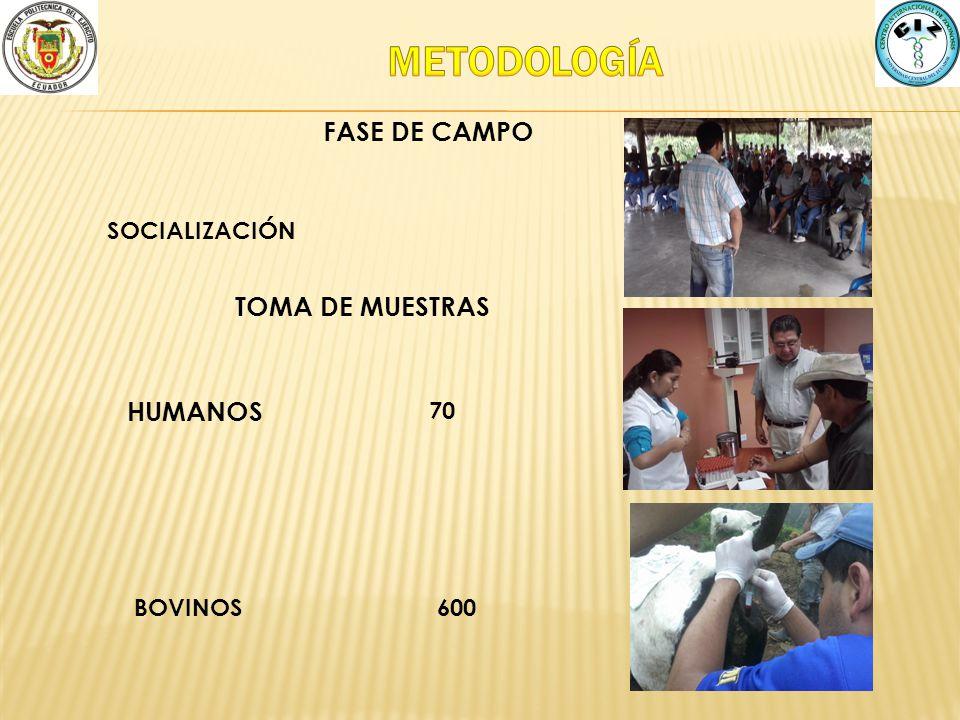 FASE DE CAMPO HUMANOS 70 BOVINOS600 SOCIALIZACIÓN TOMA DE MUESTRAS