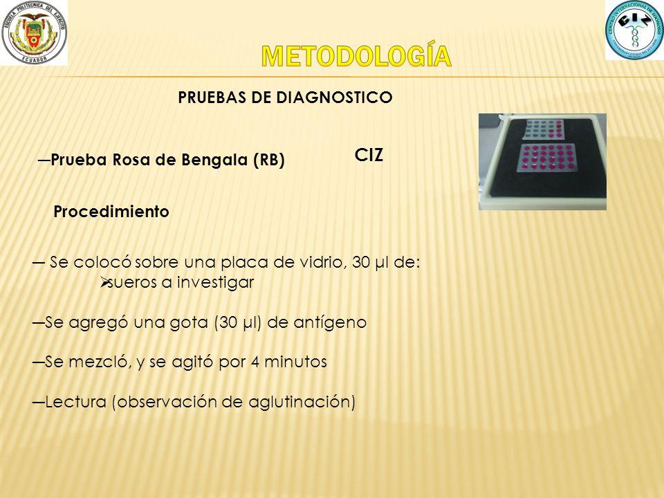Prueba Rosa de Bengala (RB) CIZ Procedimiento Se colocó sobre una placa de vidrio, 30 μl de: sueros a investigar Se agregó una gota (30 μl) de antígen