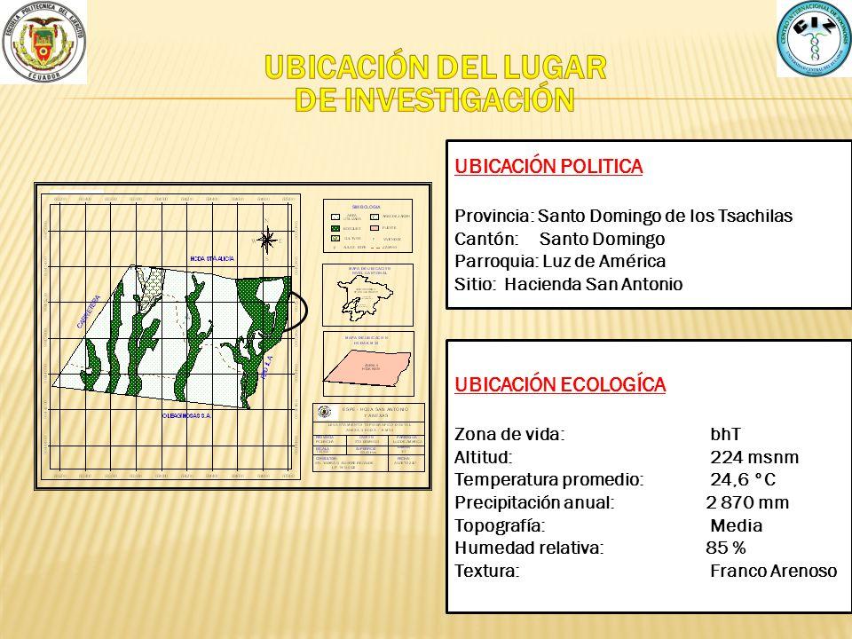 UBICACIÓN POLITICA Provincia: Santo Domingo de los Tsachilas Cantón: Santo Domingo Parroquia: Luz de América Sitio: Hacienda San Antonio UBICACIÓN ECO