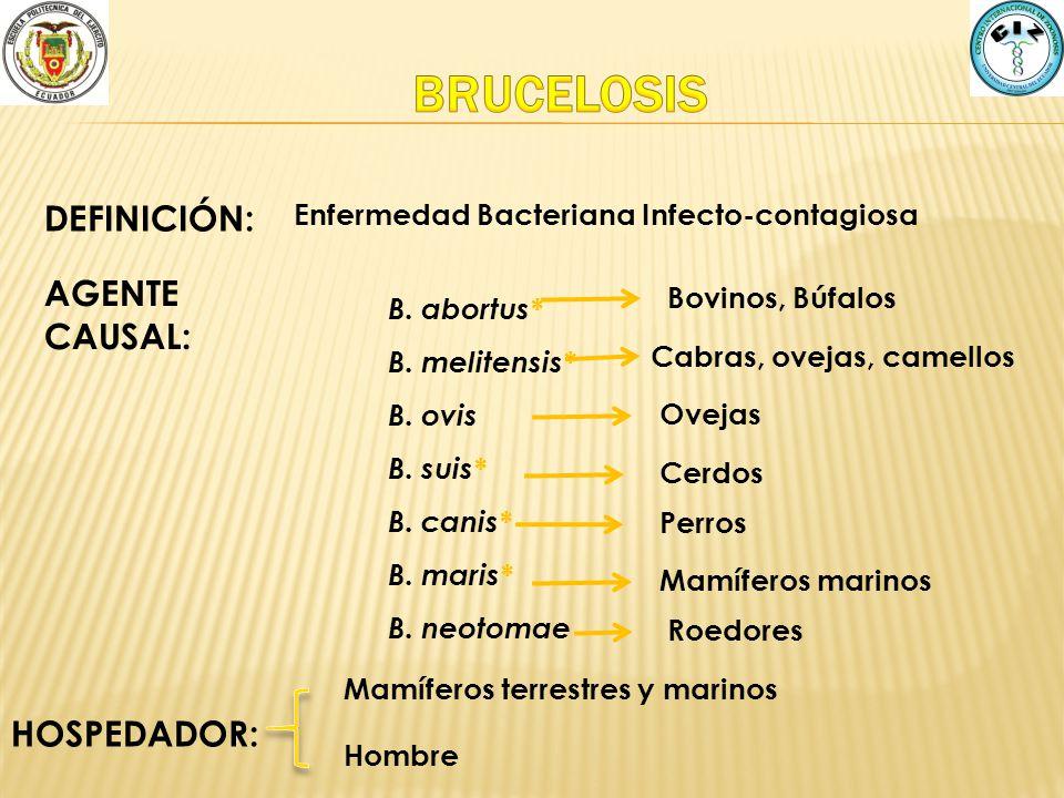 DEFINICIÓN: Enfermedad Bacteriana Infecto-contagiosa AGENTE CAUSAL: B. abortus* B. melitensis* B. ovis B. suis* B. canis* B. maris* B. neotomae Cabras