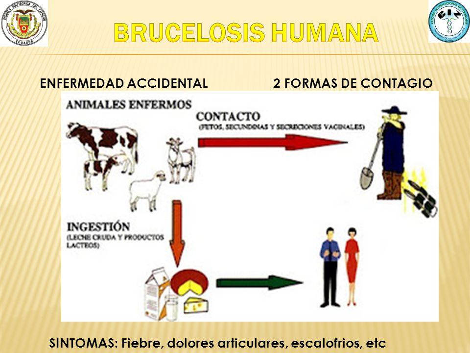 2 FORMAS DE CONTAGIOENFERMEDAD ACCIDENTAL SINTOMAS: Fiebre, dolores articulares, escalofrios, etc