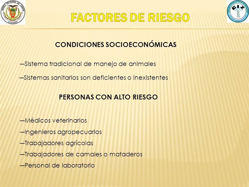 Sistema tradicional de manejo de animales CONDICIONES SOCIOECONÓMICAS PERSONAS CON ALTO RIESGO Médicos veterinarios Ingenieros agropecuarios Trabajado