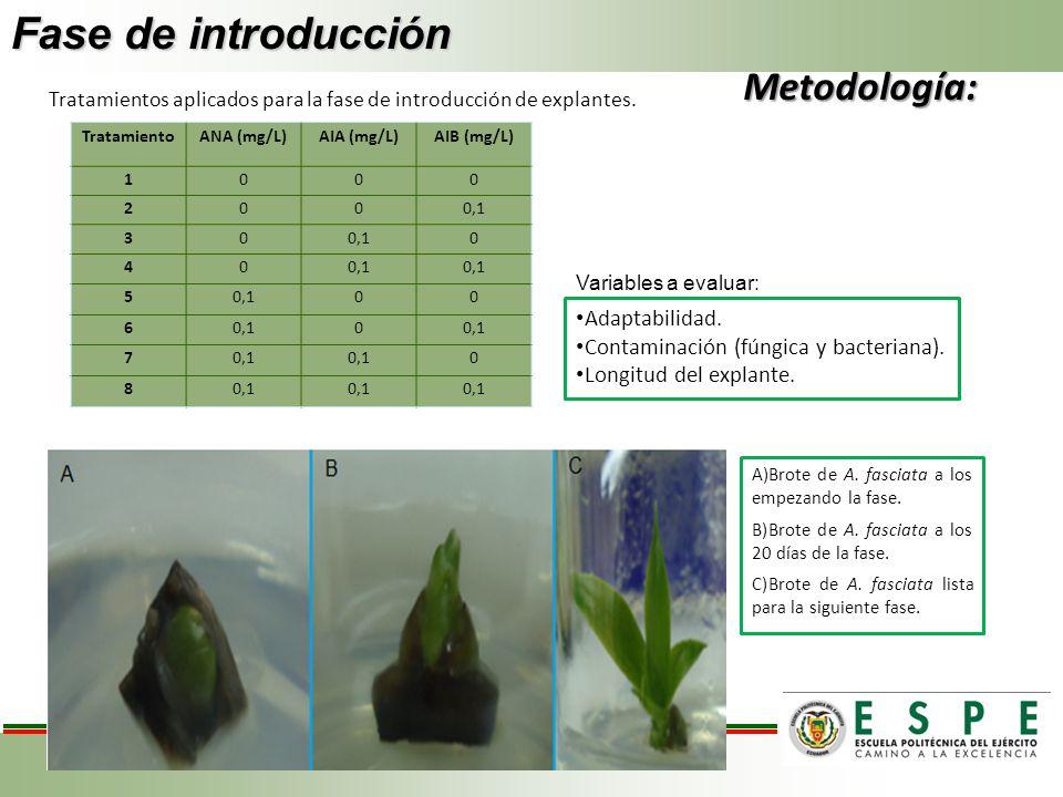 Fase de introducción TratamientoANA (mg/L)AIA (mg/L)AIB (mg/L) 1000 2000,1 30 0 40 5 00 6 0 7 0 8 Variables a evaluar: Adaptabilidad. Contaminación (f