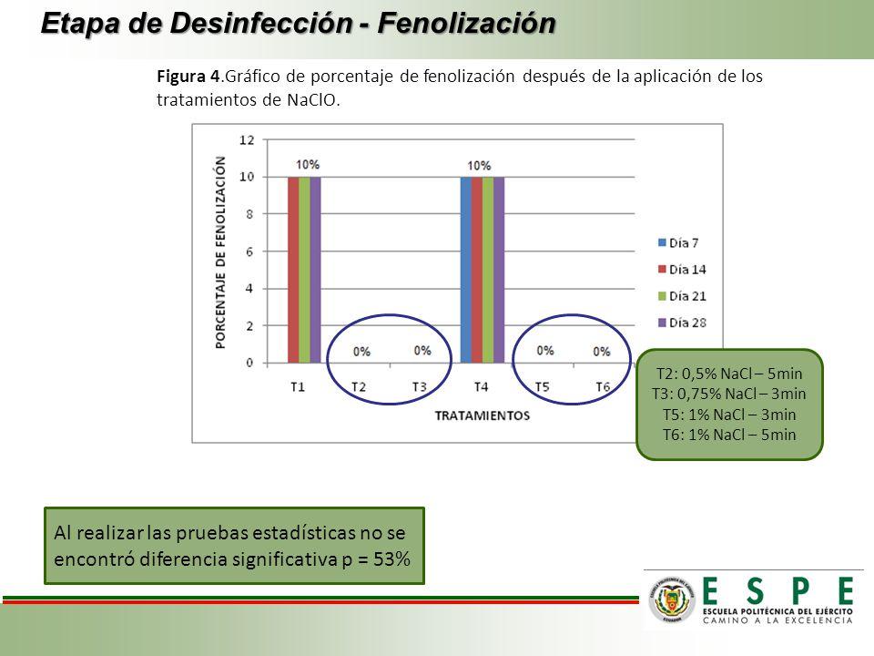 Etapa de Desinfección - Fenolización Figura 4.Gráfico de porcentaje de fenolización después de la aplicación de los tratamientos de NaClO. Al realizar