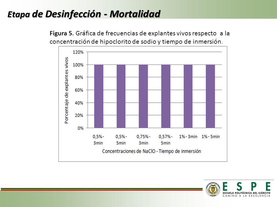 Etapa de Desinfección - Mortalidad Figura 5. Gráfica de frecuencias de explantes vivos respecto a la concentración de hipoclorito de sodio y tiempo de