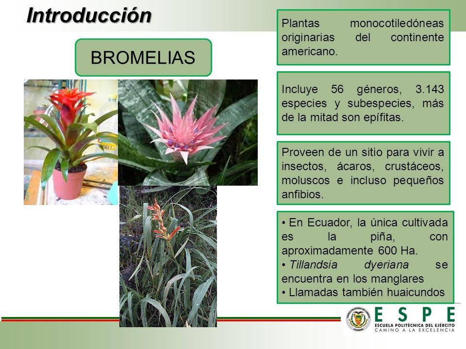 Introducción BROMELIAS Plantas monocotiledóneas originarias del continente americano. Incluye 56 géneros, 3.143 especies y subespecies, más de la mita